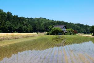 田園風景と散居村の写真素材 [FYI01585756]