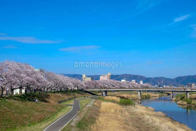 足羽川の桜並木と福井の街並みの写真素材 [FYI01585760]