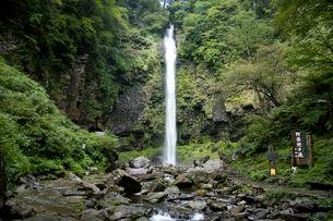 阿弥陀ヶ滝の写真素材 [FYI01585766]