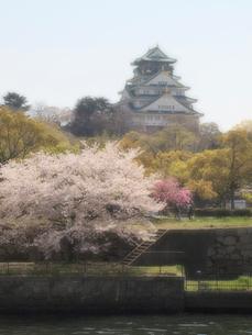 大阪城と桜の写真素材 [FYI01585774]