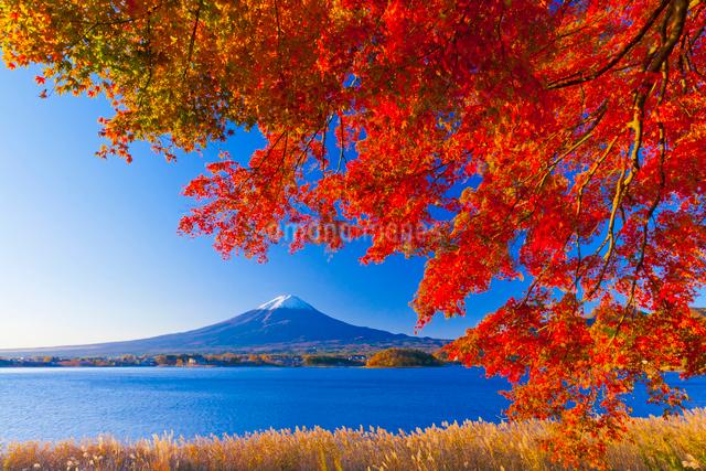 富士山と紅葉の写真素材 [FYI01585862]