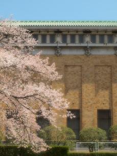 桜と京都市美術館の写真素材 [FYI01585919]