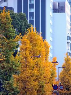 色づく街路樹の写真素材 [FYI01585960]