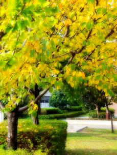 色づく木の写真素材 [FYI01585987]