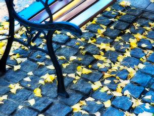 ベンチと落ち葉の写真素材 [FYI01585997]
