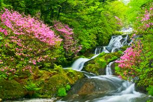 トウゴクミツバツツジ咲く竜頭の滝の写真素材 [FYI01586013]