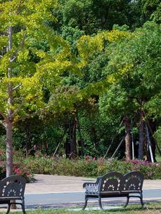 緑の木々とベンチの写真素材 [FYI01586078]