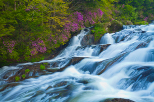 トウゴクミツバツツジ咲く竜頭の滝の写真素材 [FYI01586106]