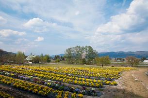 花咲く田園の写真素材 [FYI01586131]