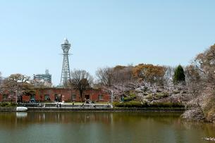 通天閣と桜と川底池の写真素材 [FYI01586184]