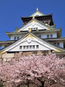 桜と大阪城の写真素材 [FYI01586191]
