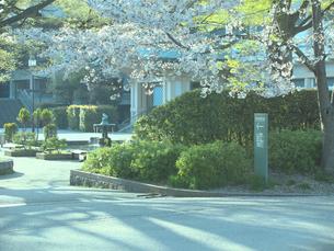 桜と京都市美術館別館の写真素材 [FYI01586231]