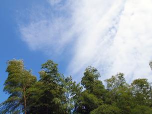 竹と青空の写真素材 [FYI01586266]