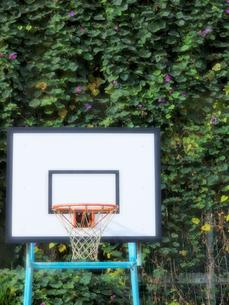 バスケットゴールの写真素材 [FYI01586280]