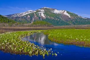 ミズバショウ咲く尾瀬ヶ原と残雪の至仏山の写真素材 [FYI01586377]