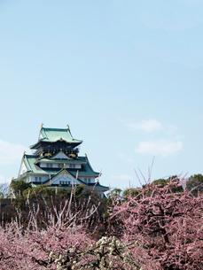 白梅と紅梅と大阪城の写真素材 [FYI01586383]