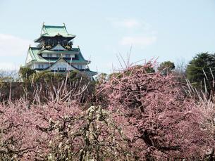 白梅と紅梅と大阪城の写真素材 [FYI01586405]