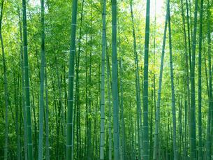 竹林の写真素材 [FYI01586417]