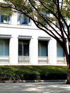 街路樹とビルの窓の写真素材 [FYI01586459]
