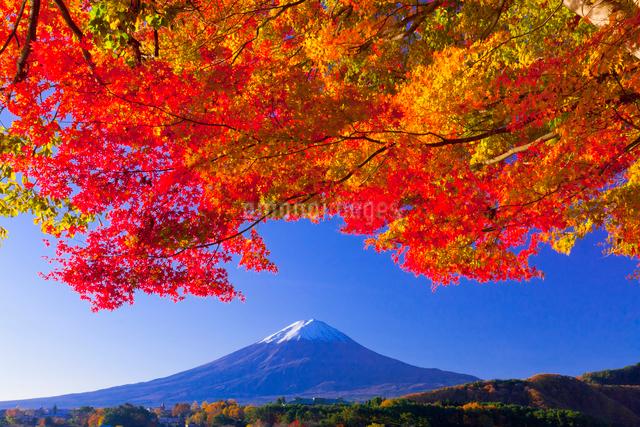 富士山と紅葉の写真素材 [FYI01586555]