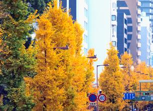 色づく街路樹の写真素材 [FYI01586841]
