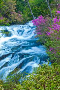 トウゴクミツバツツジ咲く竜頭の滝の写真素材 [FYI01586970]