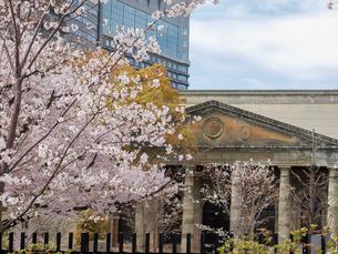 桜と旧造幣寮鋳造所の写真素材 [FYI01587046]