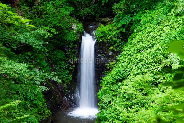 夜叉滝の写真素材 [FYI01587197]