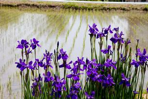 花のある田園の写真素材 [FYI01587223]