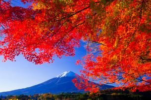 富士山と紅葉の写真素材 [FYI01587242]