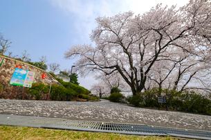 西山公園の桜の写真素材 [FYI01587470]