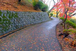 紅葉の道の写真素材 [FYI01587738]
