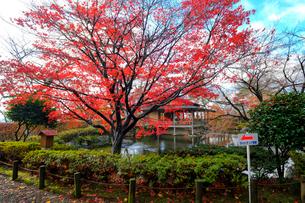 嚮陽庭園の写真素材 [FYI01587849]