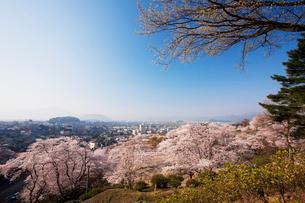 西山公園の桜の写真素材 [FYI01587923]