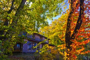 秋のイタリア大使館別荘の写真素材 [FYI01587982]