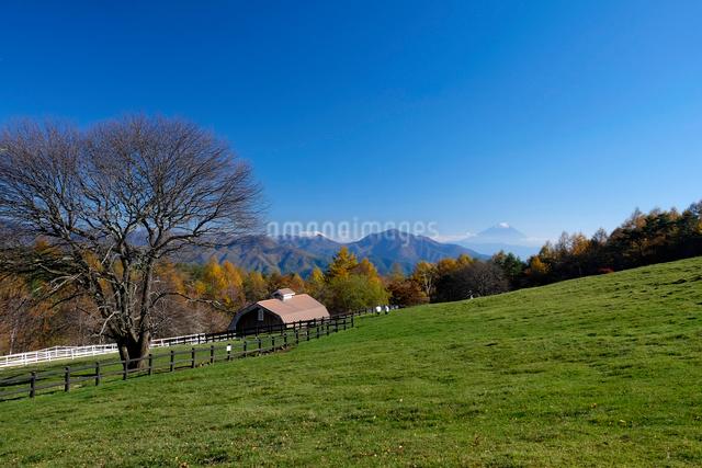 まきば公園と富士山の写真素材 [FYI01588111]
