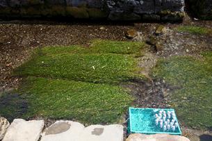 醒ケ井地蔵川とラムネの写真素材 [FYI01588151]