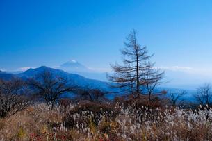 美し森からの富士山の写真素材 [FYI01588181]
