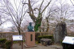嚮陽庭園の桜の写真素材 [FYI01588352]