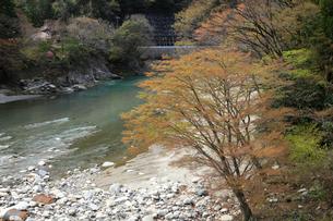 愛知川渓谷(永源寺ダム上流)新緑の写真素材 [FYI01588367]