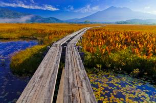 燧ケ岳へ続く木道の写真素材 [FYI01588374]