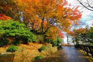 紅葉の道の写真素材 [FYI01588400]