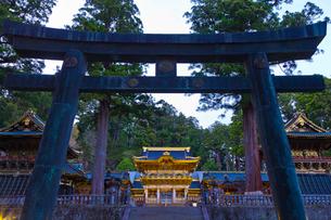 ライトアップした日光東照宮の陽明門と鳥居の写真素材 [FYI01588464]
