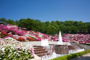 ツツジの咲く西山公園の写真素材 [FYI01588534]