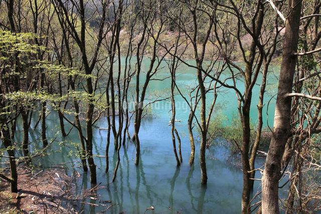 永源寺ダムの木々の写真素材 [FYI01588775]