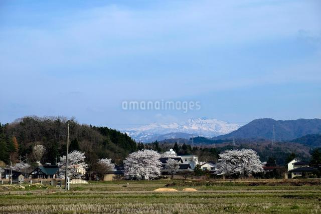 田園風景と白山連峰の写真素材 [FYI01588899]