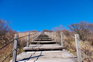 美し森階段の写真素材 [FYI01588979]