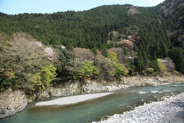 愛知川渓谷(永源寺ダム上流)新緑の写真素材 [FYI01589011]