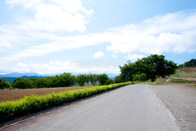 大峰高原の一本道の写真素材 [FYI01589213]