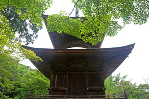 常寂光寺多宝塔新緑の写真素材 [FYI01589280]